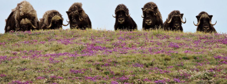 Aulavik National Park